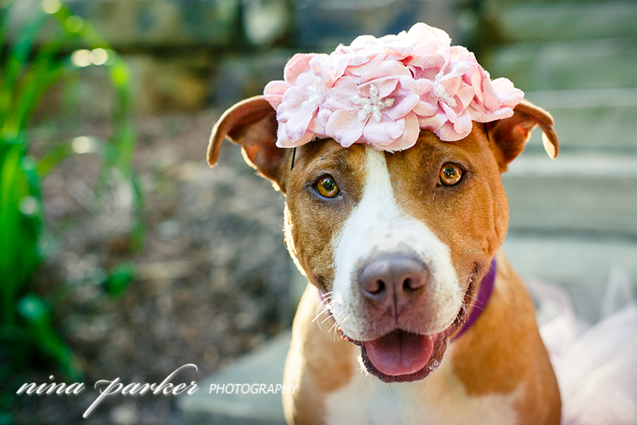 Glamour-Dog-Pitbull-Atlanta-NinaParkerPhotography-3112